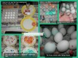 Marbled Easter Eggs Failed DIY Project